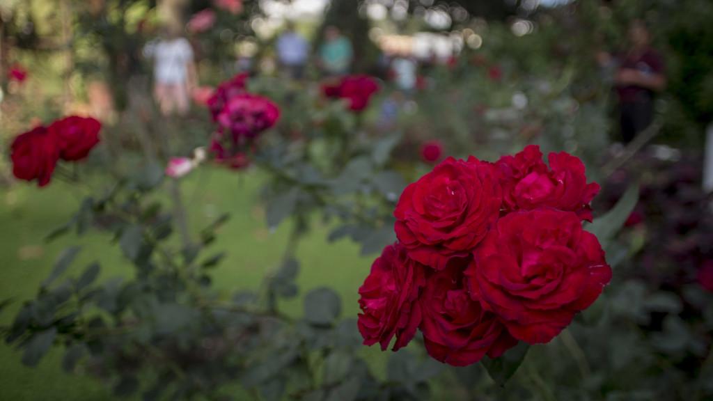 27 ANIVERSARIO DE LA CONMEMORACION DEL ASESINATO DE LOS SACERDOTES JESUITAS DE LA UCA. Los nombres de los sacerdotes jesuitas asesinados por el ejercito salvadoreño en 1989, se leen sobre una roca ubicada en el Jardín de las Rosas, el lugar donde fueron encontrados muertos los religiosos. Este 16 de Noviembre se llegan a 27 años de la masacre durante la ofensiva guerrillera que puso fin a la guerra civil en El Salvador. Foto FACTUM/Salvador MELENDEZ