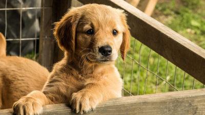 «Mi amigo Enzo»: el arte de saber hacer cine canino